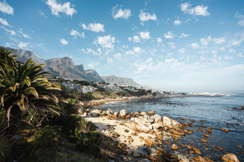 Barley Bay Beach and palm trees along Camps Bay in Cape Town