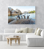 Seven penguins standing on a rock at boulders beach in Cape Town in an acrylic/perspex frame