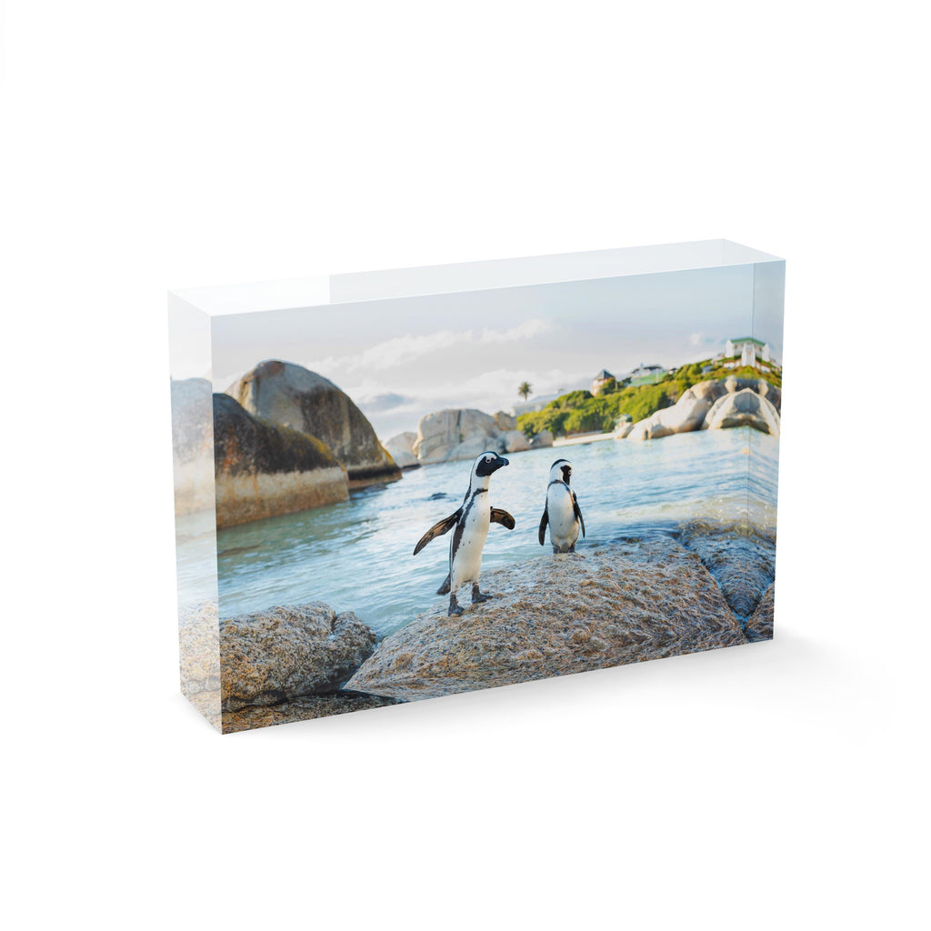 Two penguins standing on a rock at boulders beach in cape town
