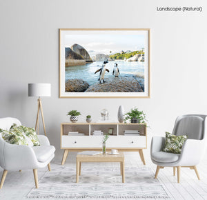 Two penguins standing on a rock at boulders beach in cape town in a natural fine art frame