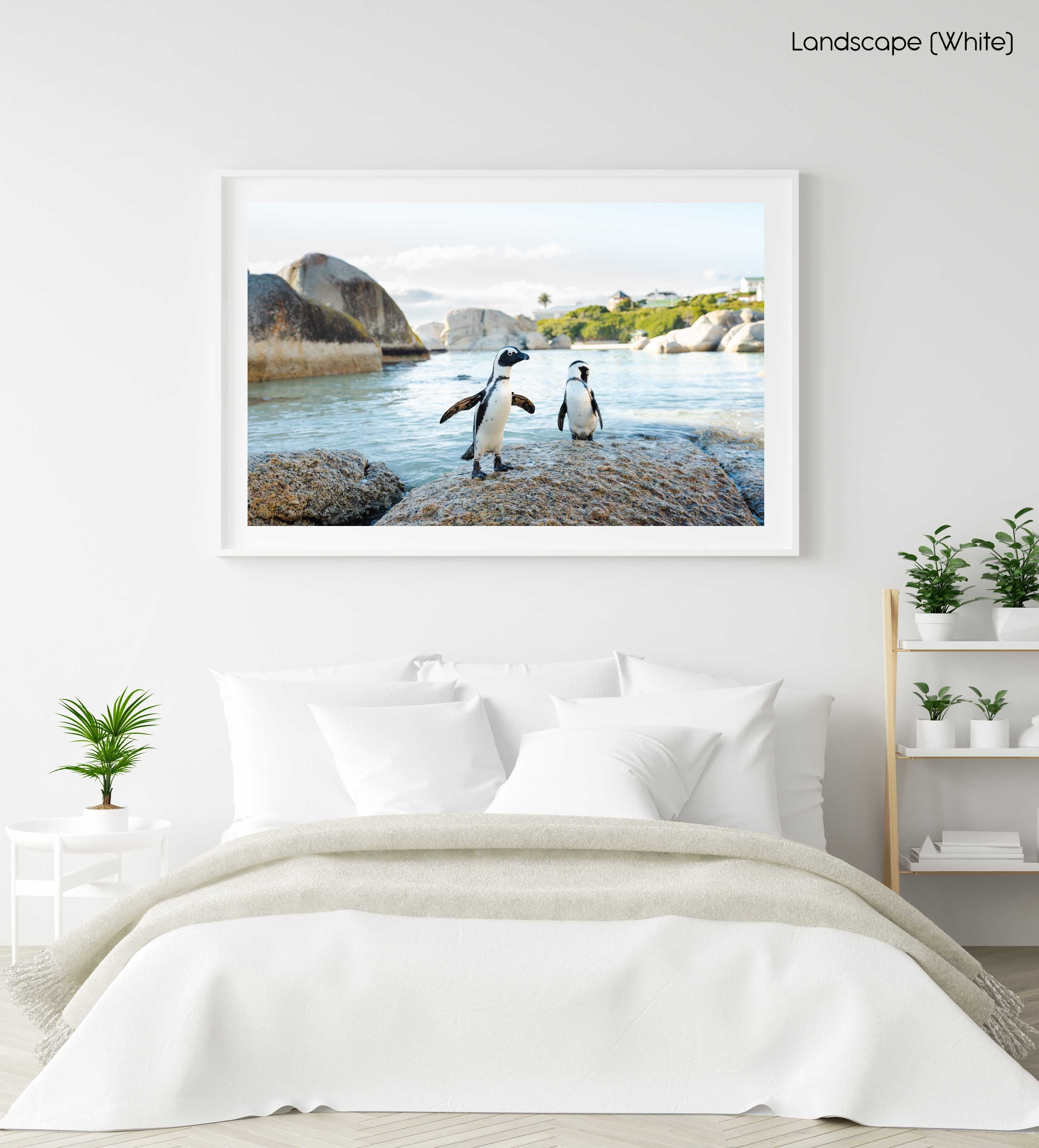 Two penguins standing on a rock at boulders beach in cape town in a white fine art frame