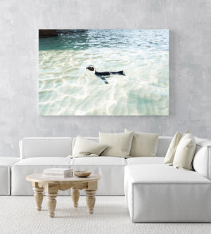 A penguin swimming in light water at boulders beach Cape Town in an acrylic/perspex frame