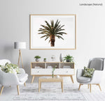 One palm tree with white background sky in a natural fine art frame