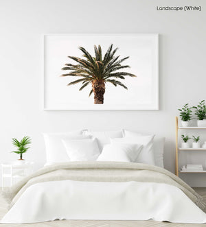 One palm tree with white background sky in a white fine art frame