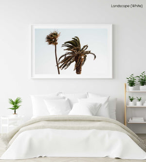 Two palm trees blowing in the wind at Ponta da Piedade in a white fine art frame