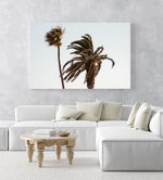 Two palm trees blowing in the wind at Ponta da Piedade in an acrylic/perspex frame