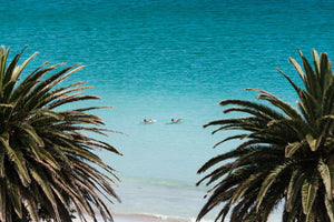 Two people swimming between palm trees at beach photo