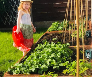 Instagarden UK | 4 Bed Instagarden | Grow Your Own Groceries |
