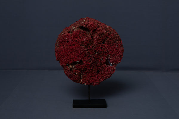Mounted Red Coral Wedding Disk from Borneo