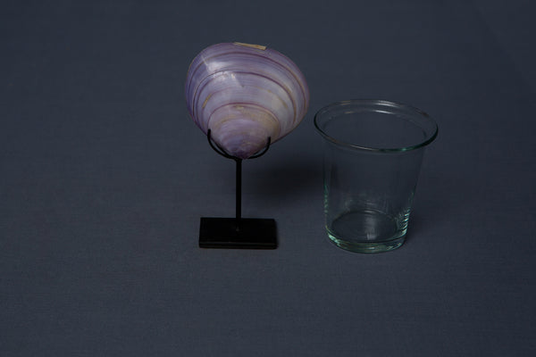 Natural Purple Clam mounted on stand