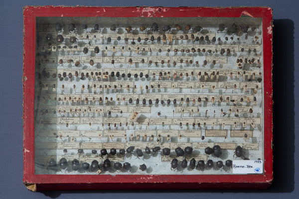 19th Century French Beetle Collection Box