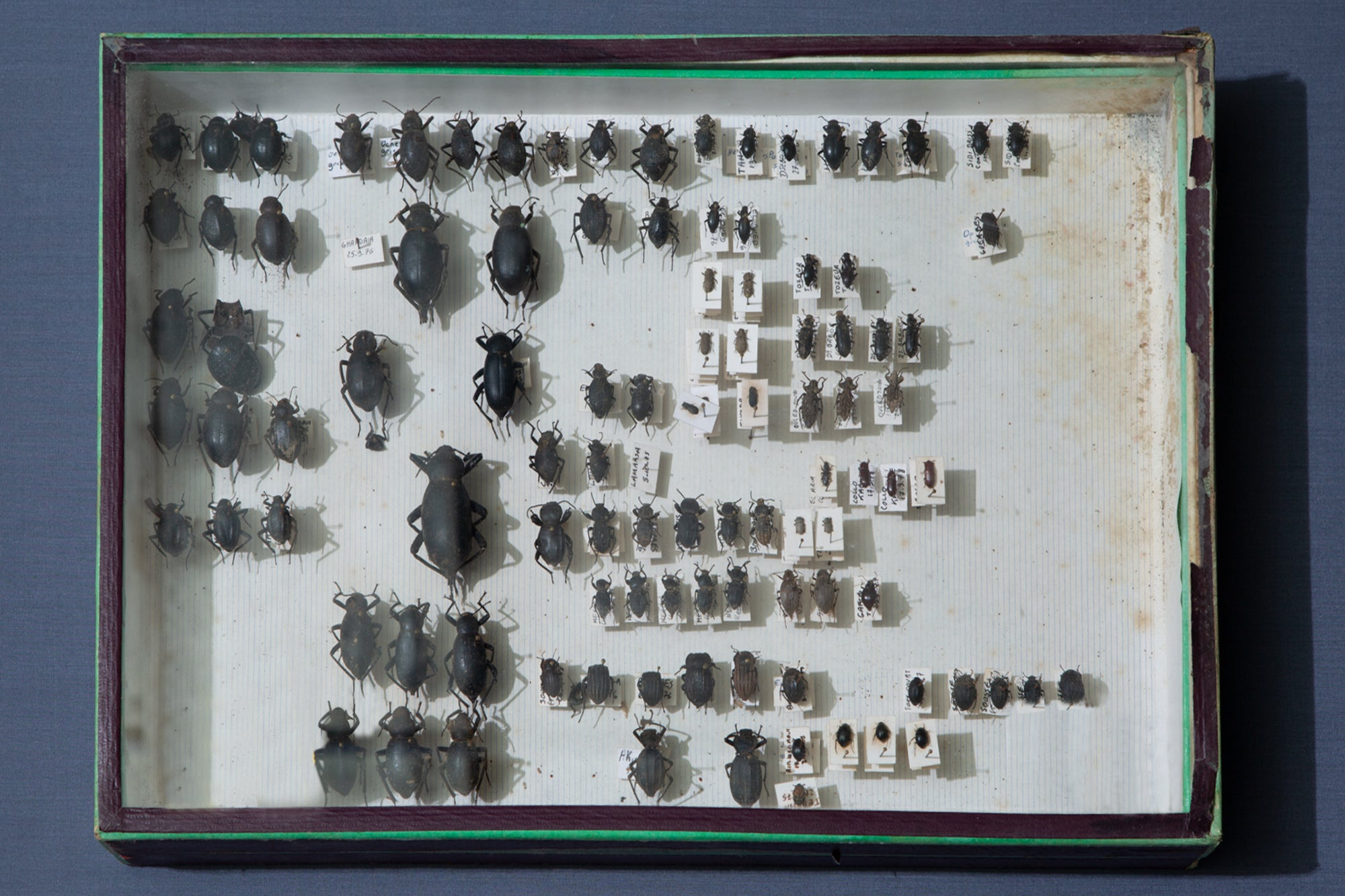 French Beetle Collection Box