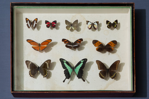 Italian Wooden Butterfly Collection Box