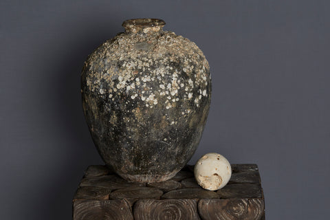 Large 16th Century Chinese Export Shell Encrusted Shipwreck Jar from the Spice Trade