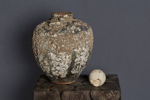 15th/16th Century Shell Encrusted Chinese Shipwreck Jar Made for Spice Trade