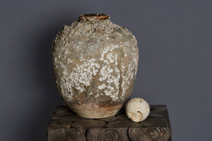 Large 16th Century Chinese Export Shell Encrusted Shipwreck Jar from Spice Trade