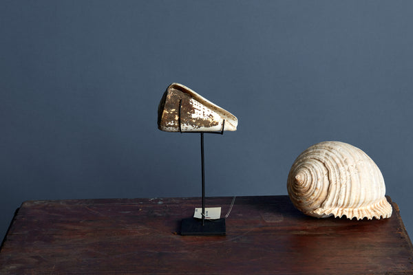 Encrusted Mounted Conch Shell