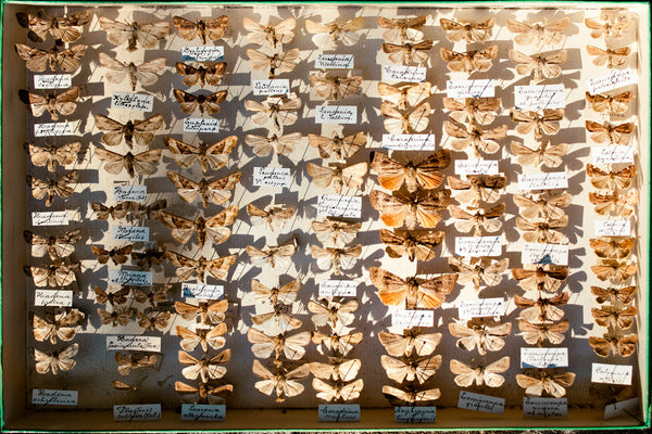 Assorted Moth Display Case