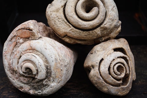 Medium Fossilized Conch Shells
