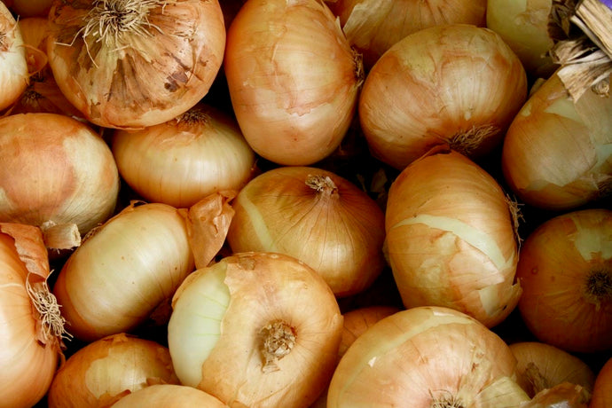 Onion - Brown
