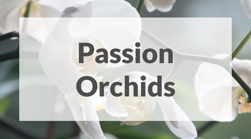 Passion Orchids
