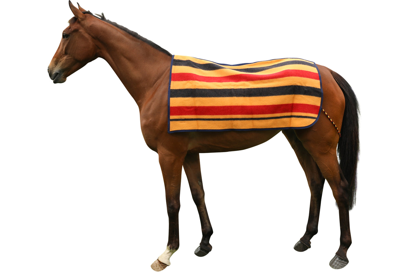 Horse - Rugs