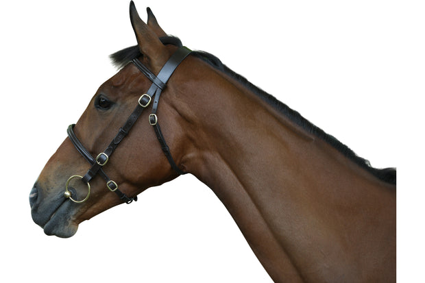 "Bridle: Inhand ""Traditional""- premium leather"