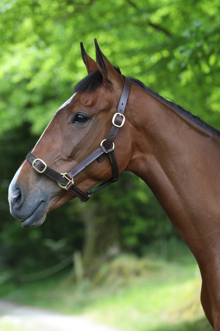 Headcollar: Latigo Premium Leather