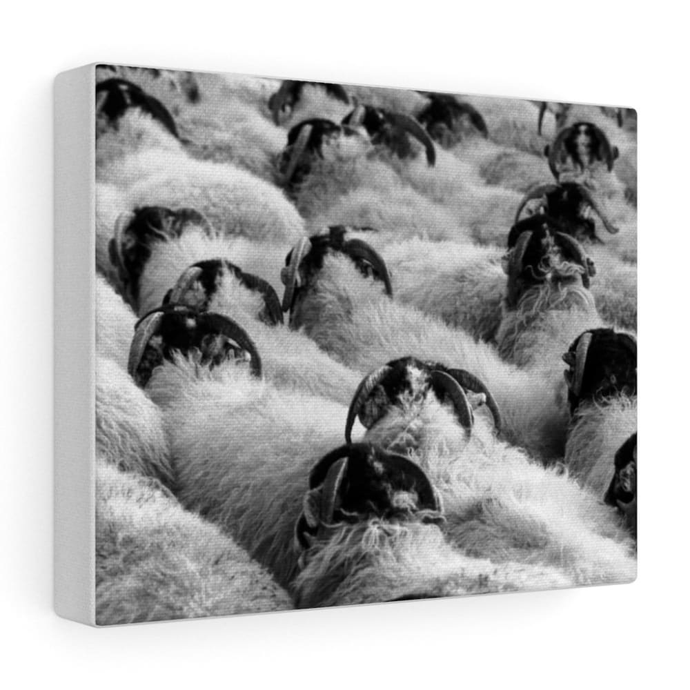 Tableau moutons - 10″ × 8″ / Stretched Canvas (1.5) - Art &