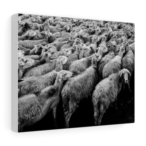 Tableau moutons - 14″ × 11″ / Stretched Canvas (1.5) - Art &