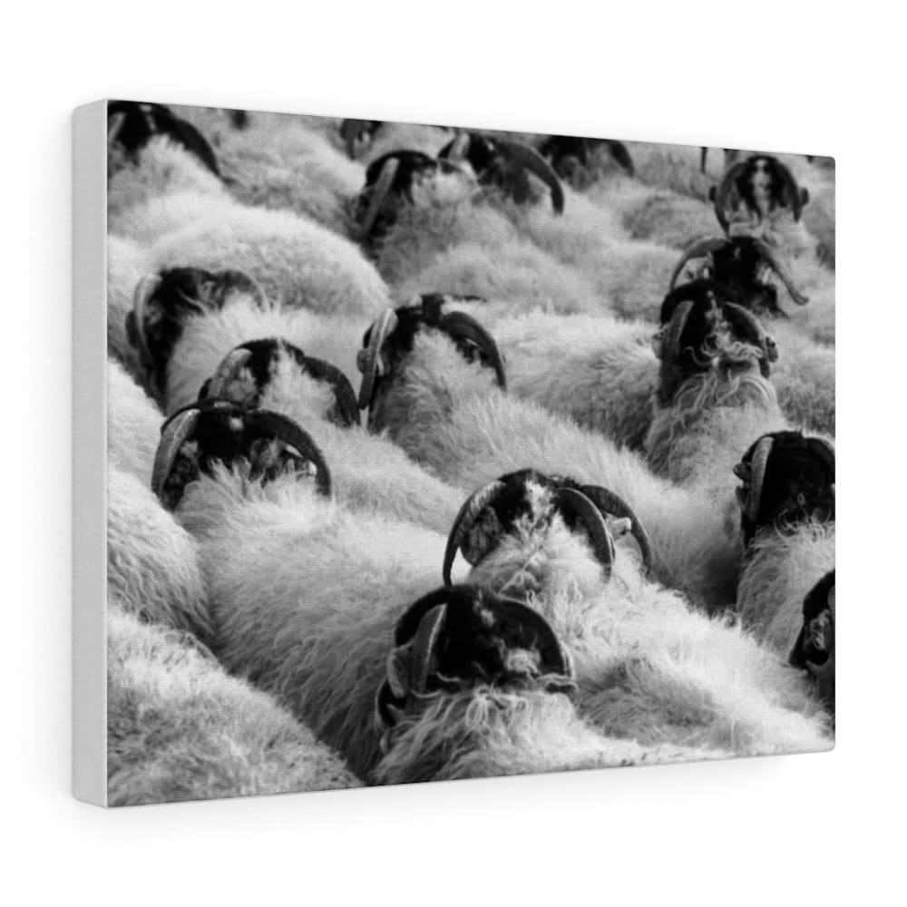 Tableau moutons - 16″ × 12″ / Stretched Canvas (1.5) - Art &