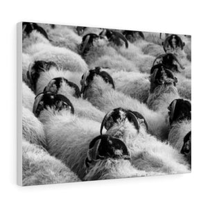 Tableau moutons - 24″ × 18″ / Stretched Canvas (1.5) - Art &