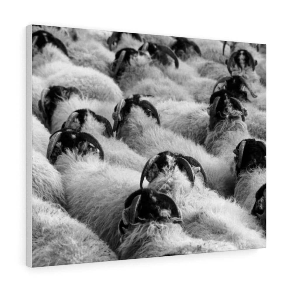 Tableau moutons - 30″ × 24″ / Stretched Canvas (1.5) - Art &