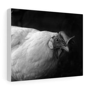 Tableau poule - 14″ × 11″ / Stretched Canvas (1.5) - Art &