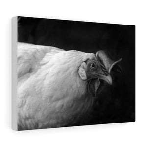 Tableau poule - 16″ × 12″ / Stretched Canvas (1.5) - Art &