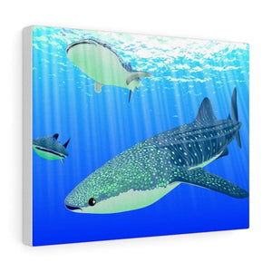 Tableau requins baleines - 14″ × 11″ / Premium Gallery Wraps