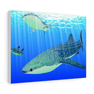 Tableau requins baleines - 16″ × 12″ / Premium Gallery Wraps