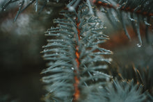 Load image into Gallery viewer, Blue Spruce Candle