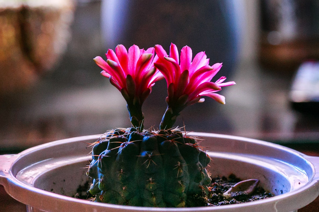 Cactus Flower & Jade Candle