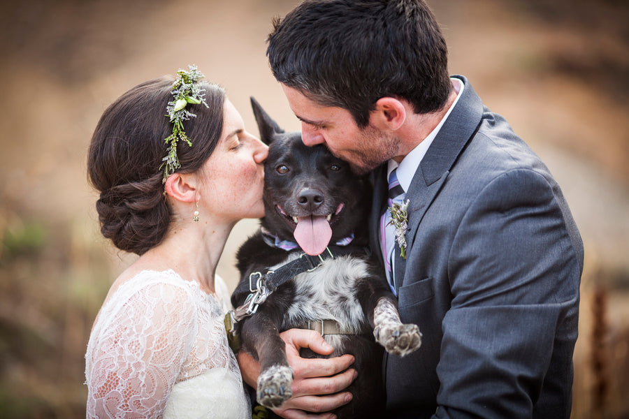 Couple Kissing Dog Groomsman | 6 Dogs Who Stole the Show | Katie Keighin Photography | Kate Aspen