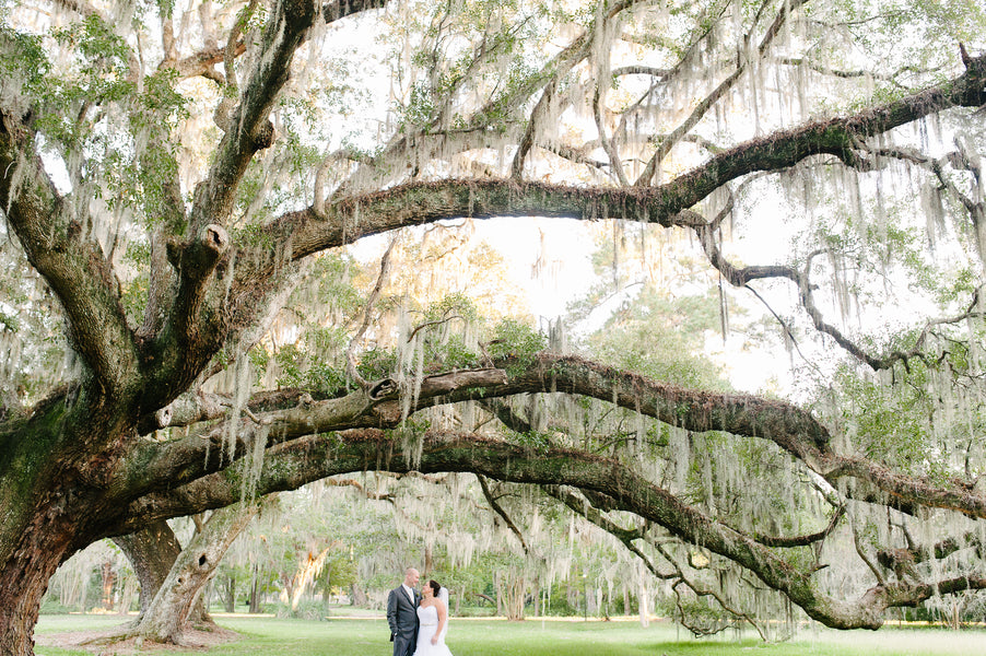 Bride and Groom Under Spanish Moss Covered Trees | Plantation Wedding in Charleston | Riverland Studios