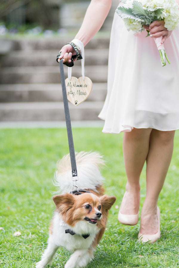 Dog | Opulent Mansion Wedding | Daisy Saulls Photography