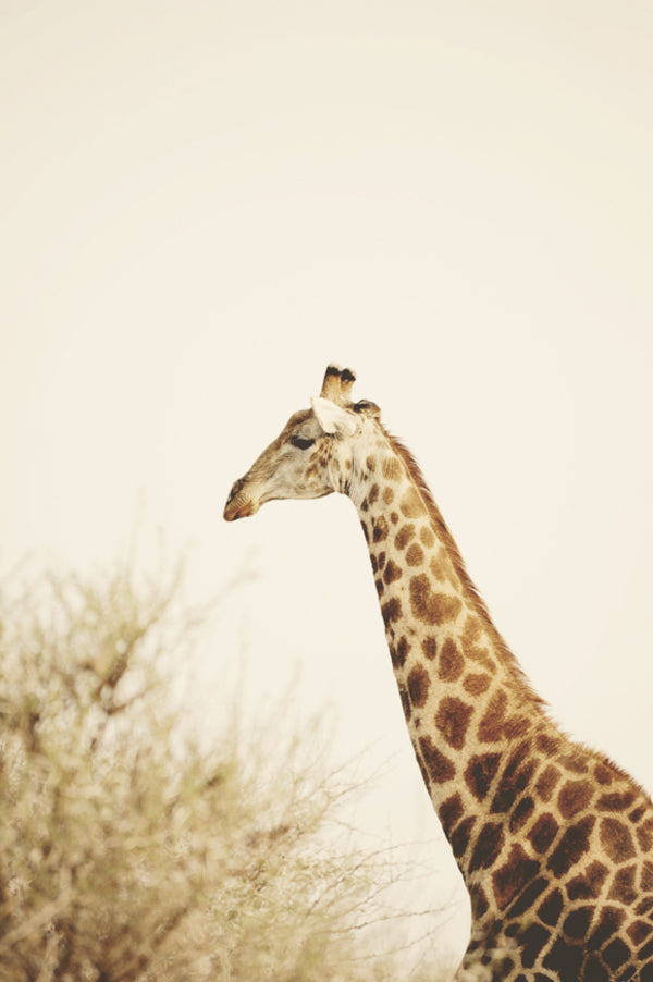 Giraffe | African Safari Wedding | Sarah Marie Photos