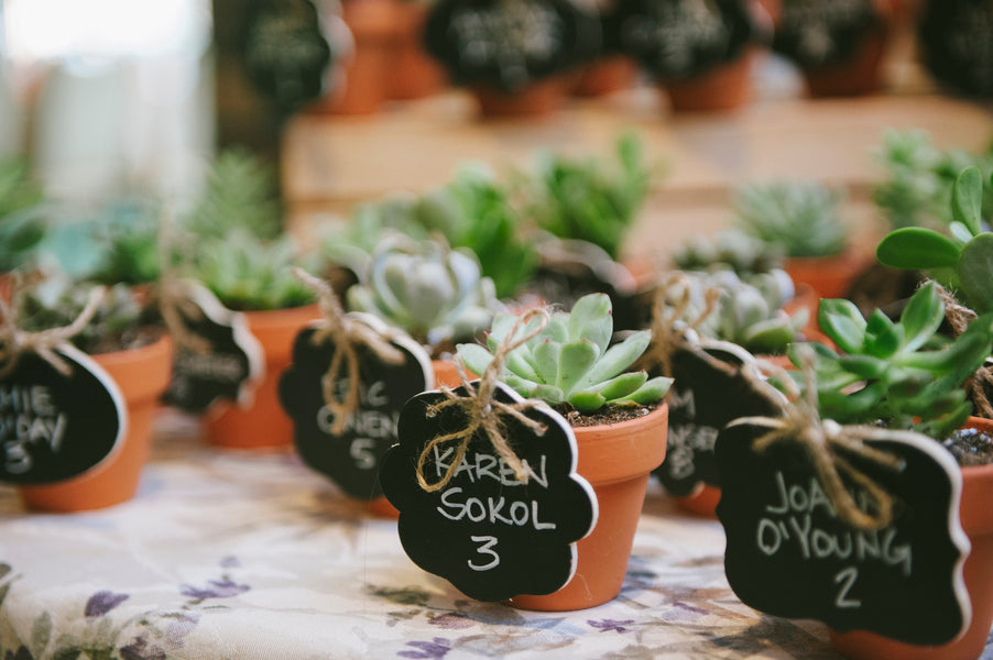 Succulent Place Card Holders | Lemon Twist Images