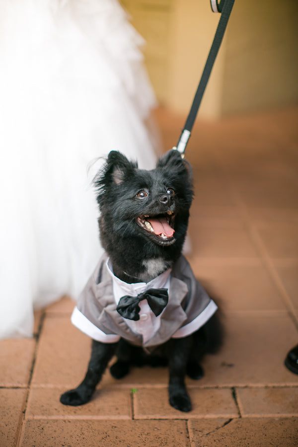 Dog Ring Bearer | Pink Wedding in Florida | Claudette Montero Photography