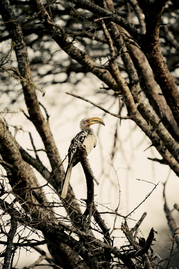 Yellow Billed Hornbill | African Safari Wedding | Sarah Marie Photos