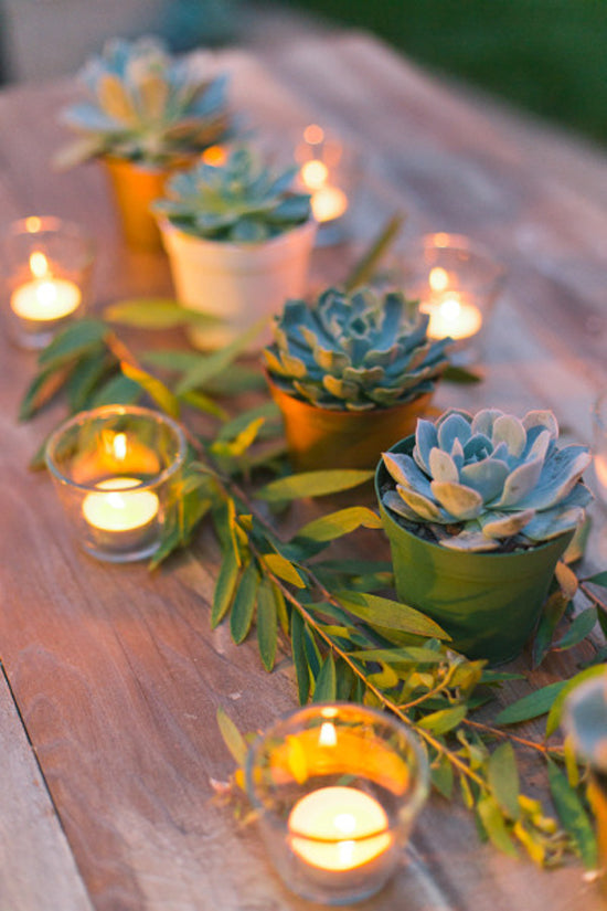 Succulent Centerpieces | Creating The Perfect Backyard BBQ | Kate Aspen