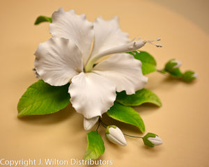 HIBISCUS-SINGLE OPEN 1PC WHITE