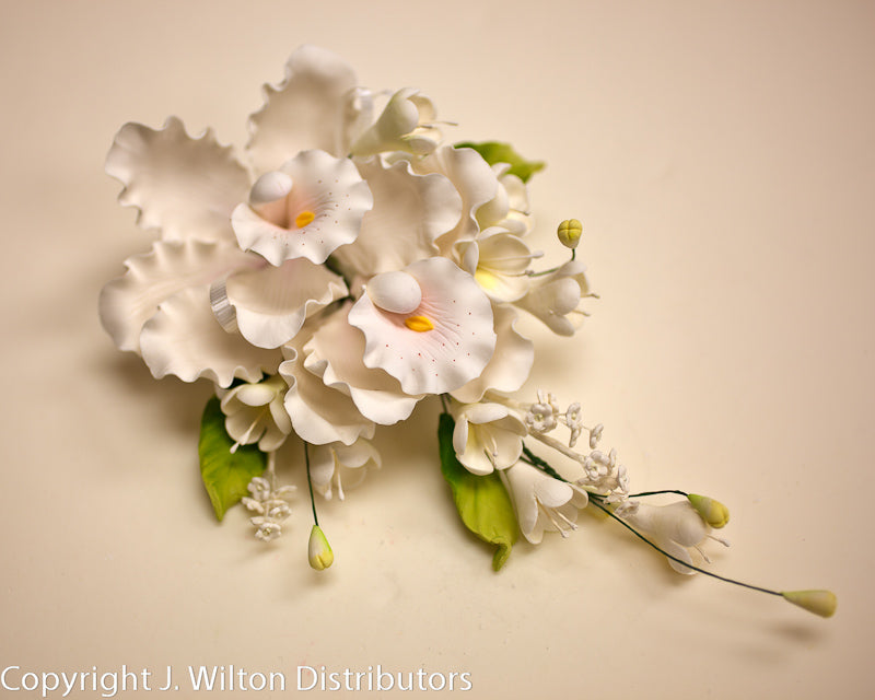 DENDROBIUM SPRAY DOUBLE 1PC WHITE