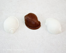 POLYCARBONATE CHOCOLATE MOLD CONCH SHELL